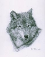 Wolf Portrait by Hareguizer
