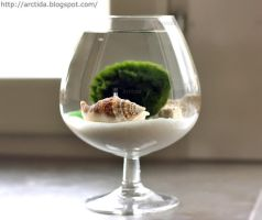 DIY tutorial Marimo mini aquarium by Arctida