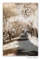 White path by Behindmyblueeyes