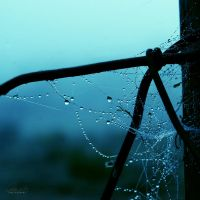 Morning Tear II by gf-biju