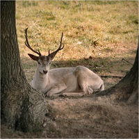 White Stag, BWC. by RowennaCox