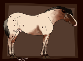 946 TK's Nacho by Tempest-Keep-Stables