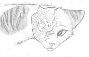 Brightheart Sketch by Sky-Lily