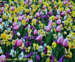 Shades Of April 30 by dandy-cARTastrophe