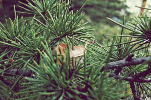 pine branch by ANDMAiYESi1986