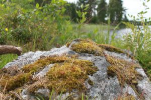 Mossy Rock 1 by Digimaree