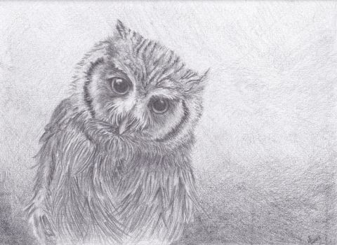 Owl Sketch by thewaterproofrobot