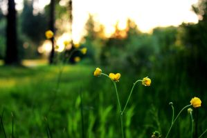 Tiny yellow flowers by Manonvr