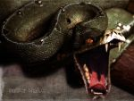 the evil panter snake by xecho