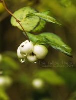 White Tears by forindet