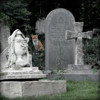 The Cemetery visitor by MCkopath