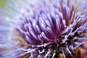 Thistle by dea1h