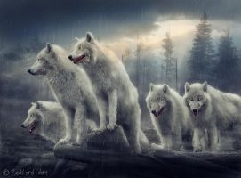 Wolfs by ZedLord-Art