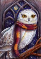 Hedwig in the Owlery by MissCosettePontmercy