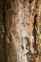 Bark Texture April - 2014 - 1 by toshema