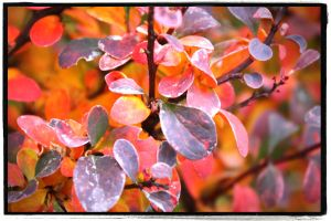 Fall Leaves by beccainlayton