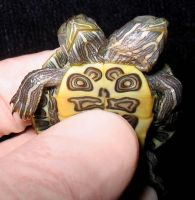 Freak Two Headed Turtle by DETHCHEEZ