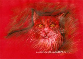 Red Cat by Ludifico