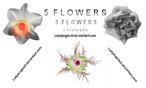 5 Flowers by LadyAngiexD