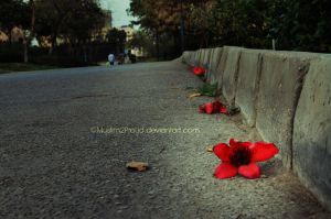 Lonely Flower by muslim2proud