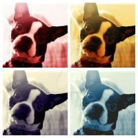 Doggy Warhol by WadeCreativeSuite