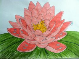 water lily by Cassidy-Slingby