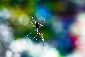 Itsy Bitsy Spider by leafinsectman