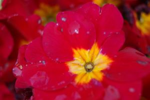Flower by MaximePerrin