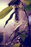 Forgotten spiderweb by whenSmyledoesnttalk