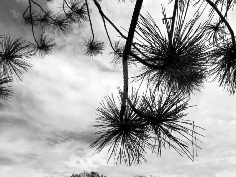 Pokey Branches and Cloudy Skies by JacobMcClure