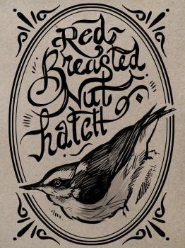 Red-Breasted Nuthatch Ink by yolque