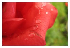 Rainy Red Rose II by Ede1986