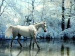 Frozen by Misty-B6