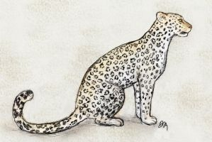 Arabian Leopard by graphiteforlunch
