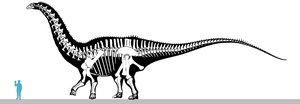 Apatosaurus (OMNH 1670) skeletal drawing by oghaki