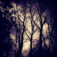 ~Haunted Woods~ by Belynx16