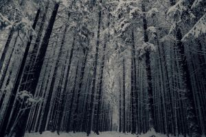 Swiss Winter Forest by lenjaminbang