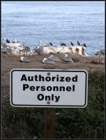 Authorized Personnel Only by Macomona