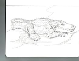 Alligator Drawing from Claws and Paws. by Stnk13