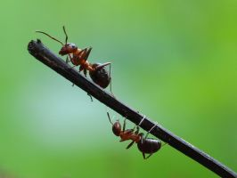 forest ants by DonAbi