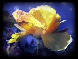 Flowers are without hope. by x--photographygirl