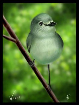 Vireo by fearn
