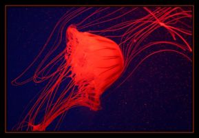 Jellyfish by Tuftless