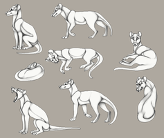 Chatlands Thylacine Pose Set - Willows Exclusive by AethonGryphon