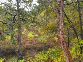Autumm in the forest nov.2012 by Trea1969