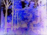 Negative Forest by jenklk2