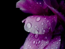 Purple Drop... by Wendy018GD