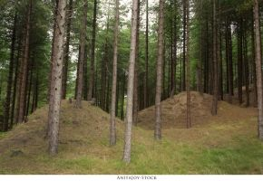 Forest 70 by AnitaJoy-Stock