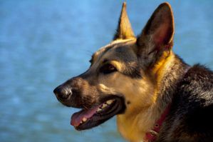 HDR - GSD at the River by Sudak