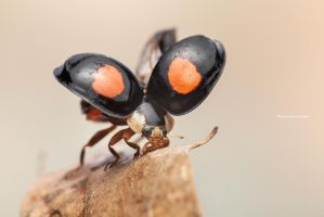Showing his Armor ( Lady bug ) by MohannadKassab